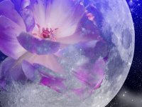 art by darla-illara.deviantart.com